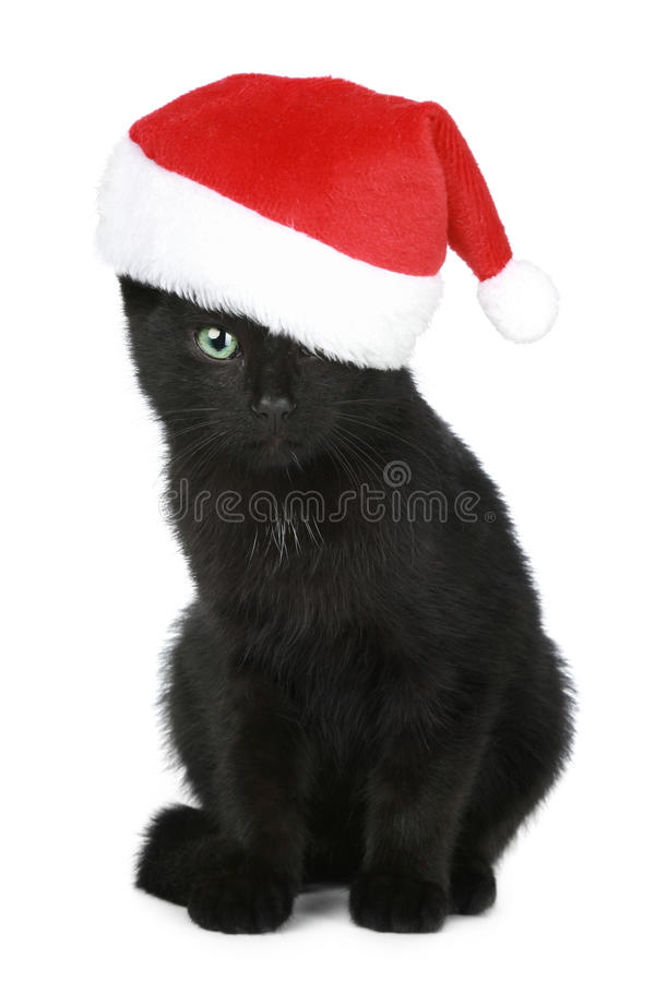 Black kitten in a Christmas hat stock image