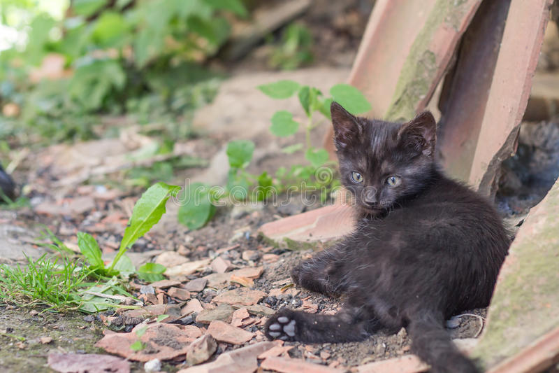 Black kitten. Close up of a cute black kitten stock photo