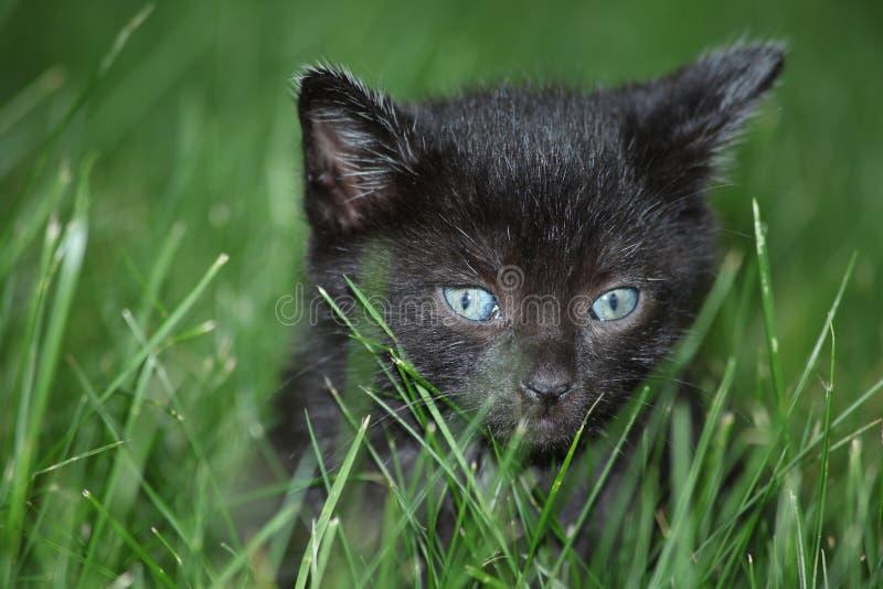 Black kitten in the grass stock photo