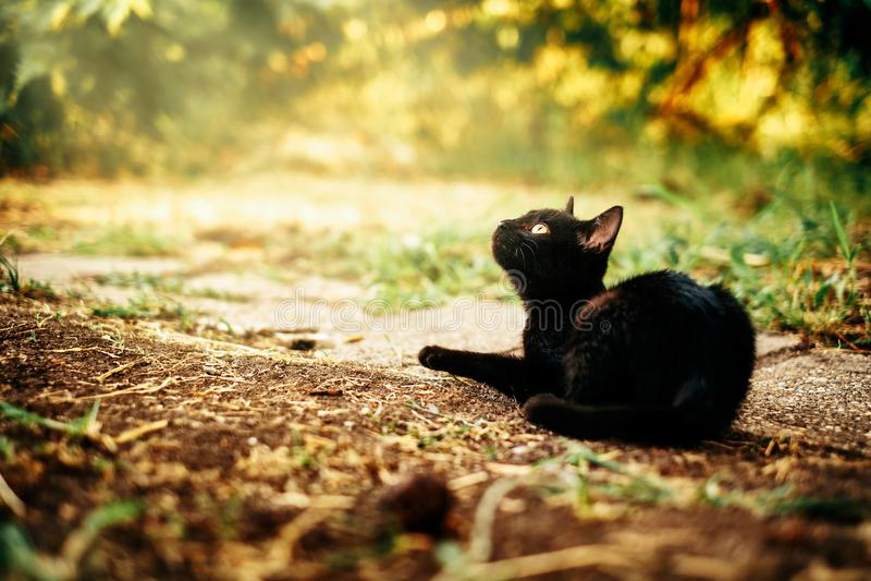 Black kitten. On the ground royalty free stock photos