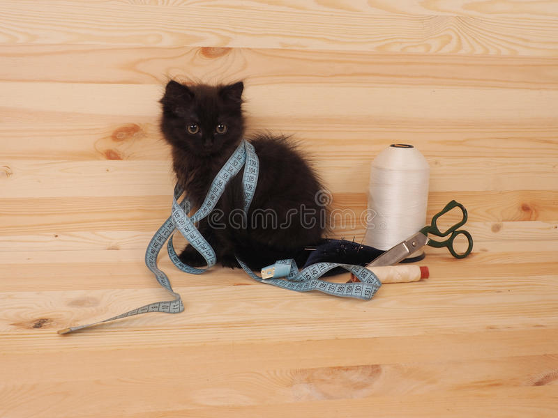 Black kitten with items for sewing. Black cute kitten with items for sewing stock image