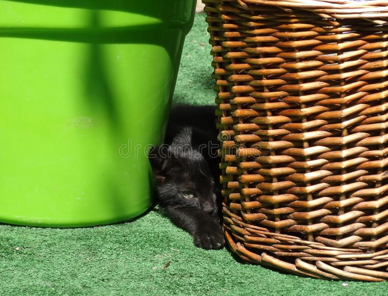 Black kitten lie and play stock photography