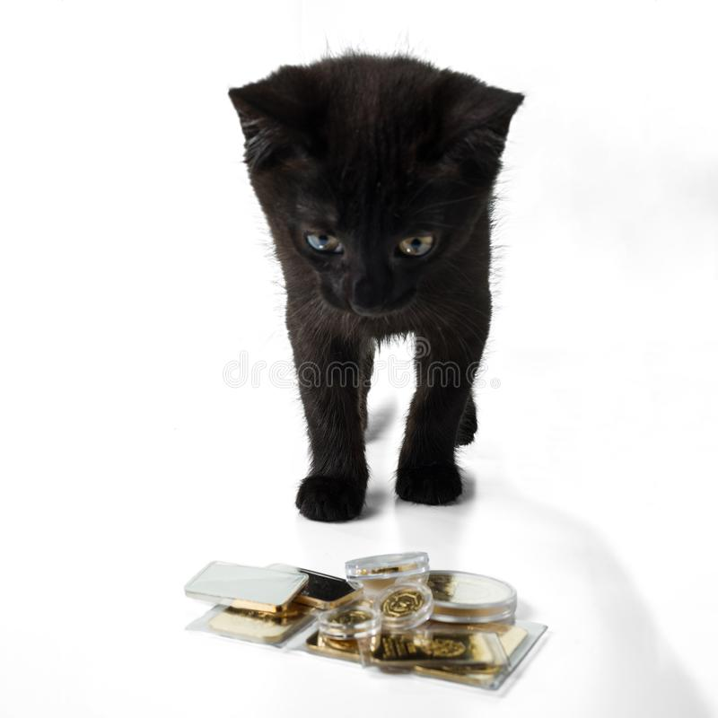 A black kitten looks at a pile of gold bars and coins. Isolated on white background. Selective focus stock images