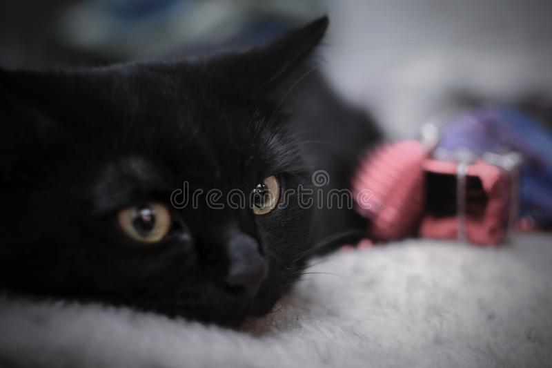 Black kitten on the background of Christmas decorations stock photography