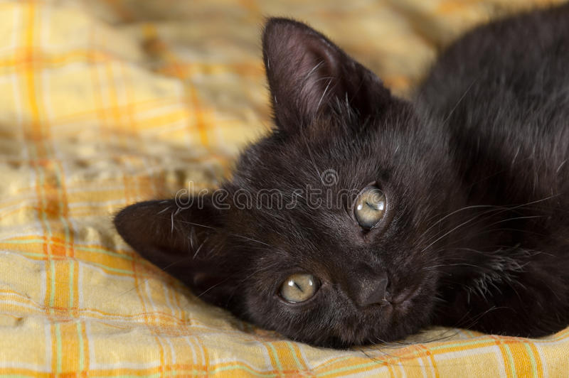 Black kitten lying on the bed royalty free stock photo