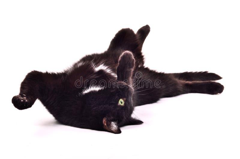 Black kitten lying on it's back upside down royalty free stock images