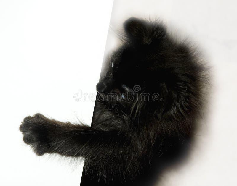 Black kitten playing royalty free stock photos