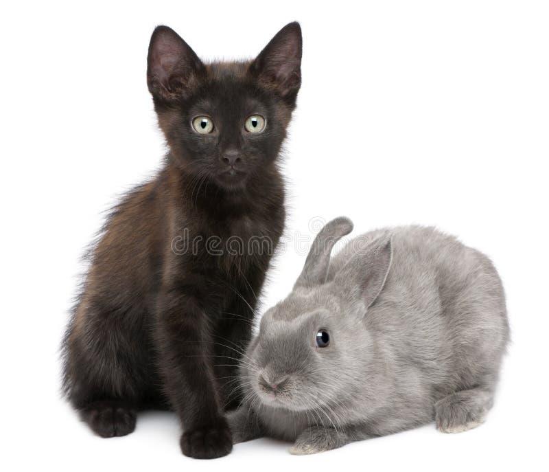 Black kitten playing with rabbit royalty free stock photo