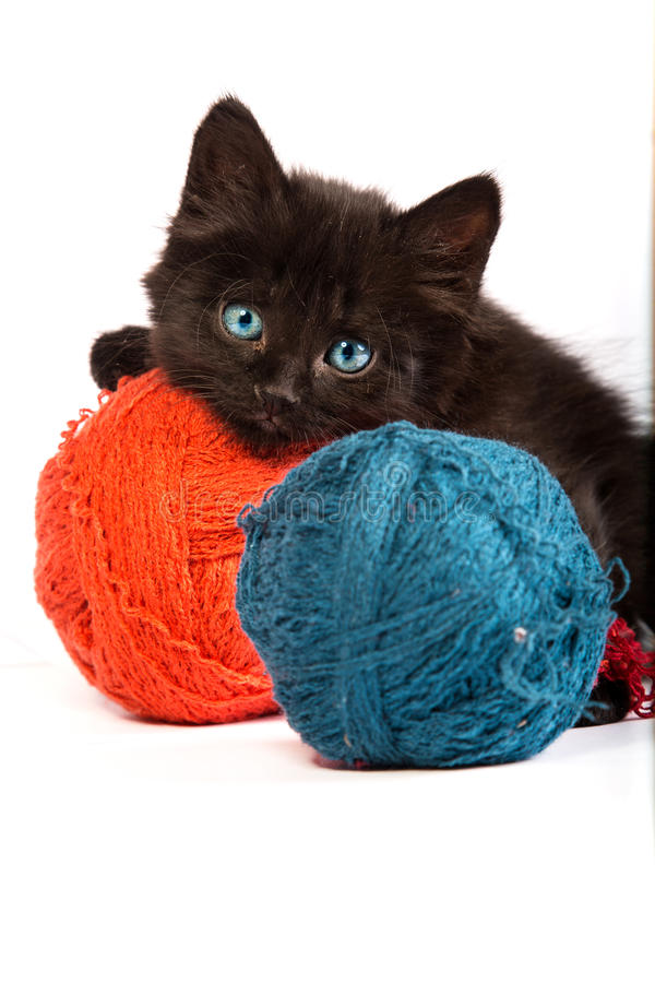 Black kitten playing with a red ball of yarn on white background royalty free stock photography