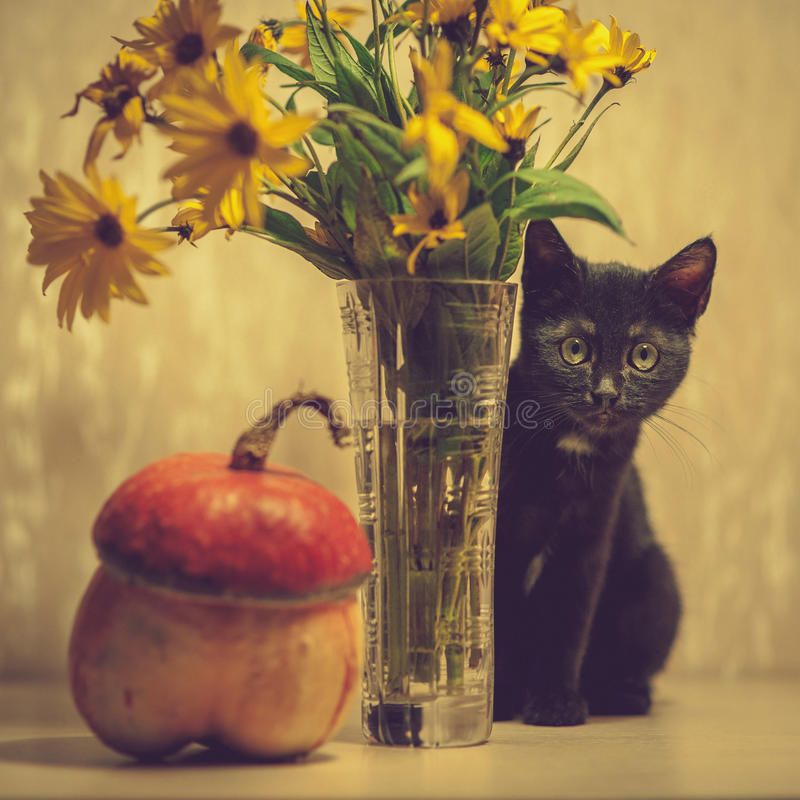 A black kitten and a pumpkin. royalty free stock photography