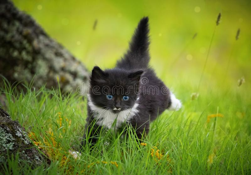 A black kitten running stock image