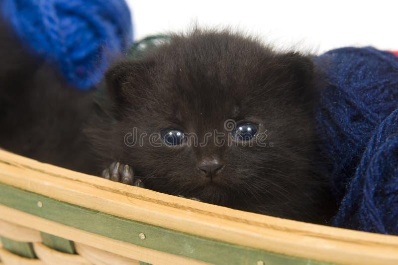 Black kitten sitting royalty free stock image