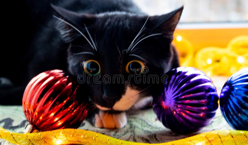 Black kitten sitting next to a Christmas tree toy, Christmas toys and watches. Isolated on white background. stock photos