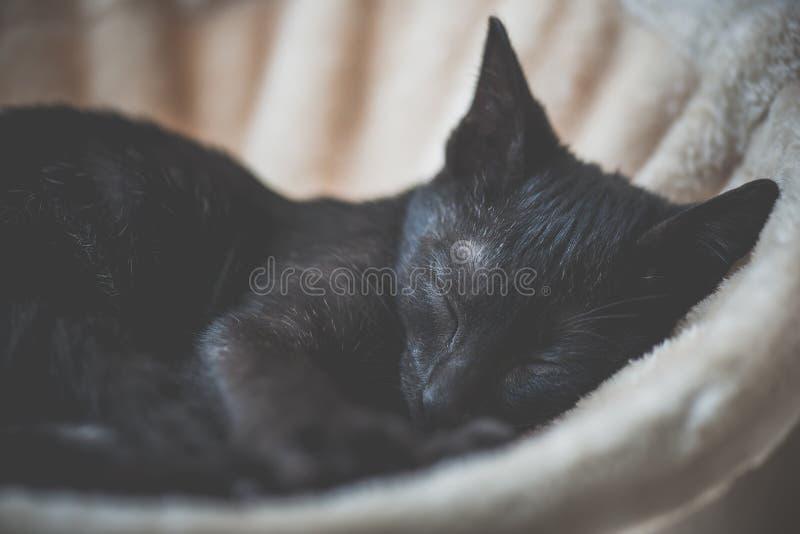 Black kitten sleeping on cat tower stock image