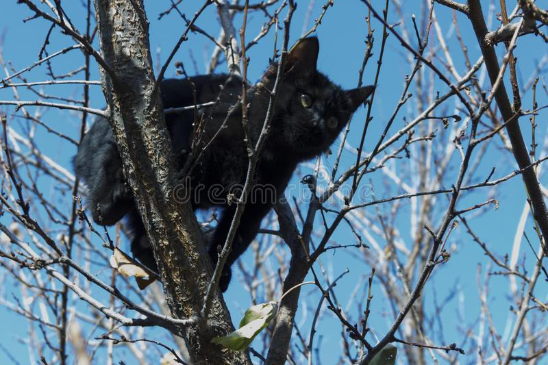 Black kitten on a tree against a blue sky. royalty free stock image