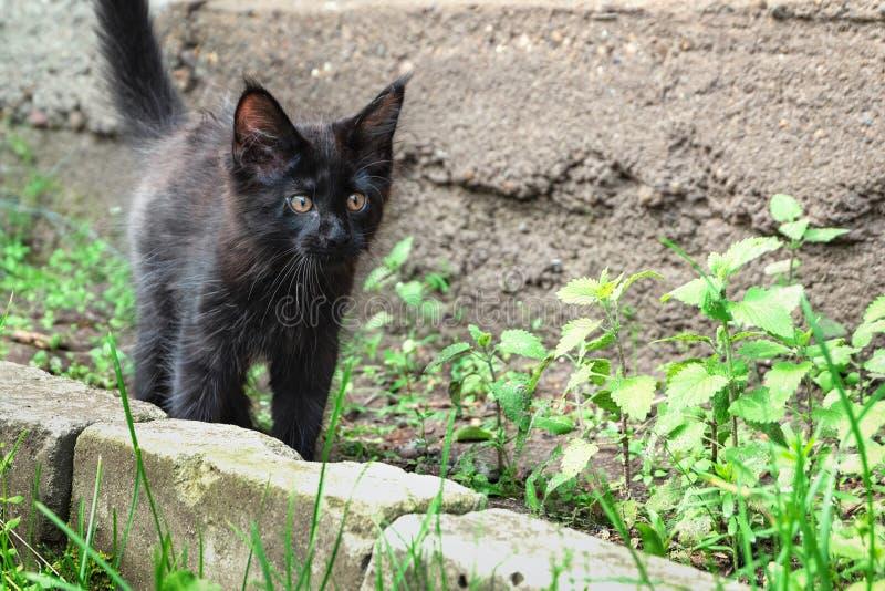 Black kitten walking on the street. Little black cat.  royalty free stock image