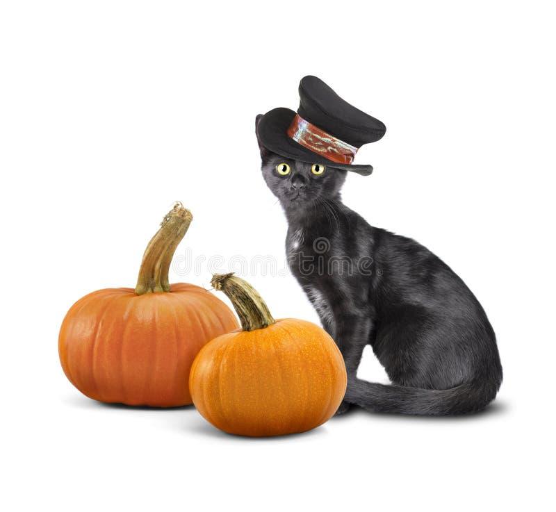 Black kitten wearing hat sitting next to pumpkins on white background. Feliz Halloween fotografía de archivo