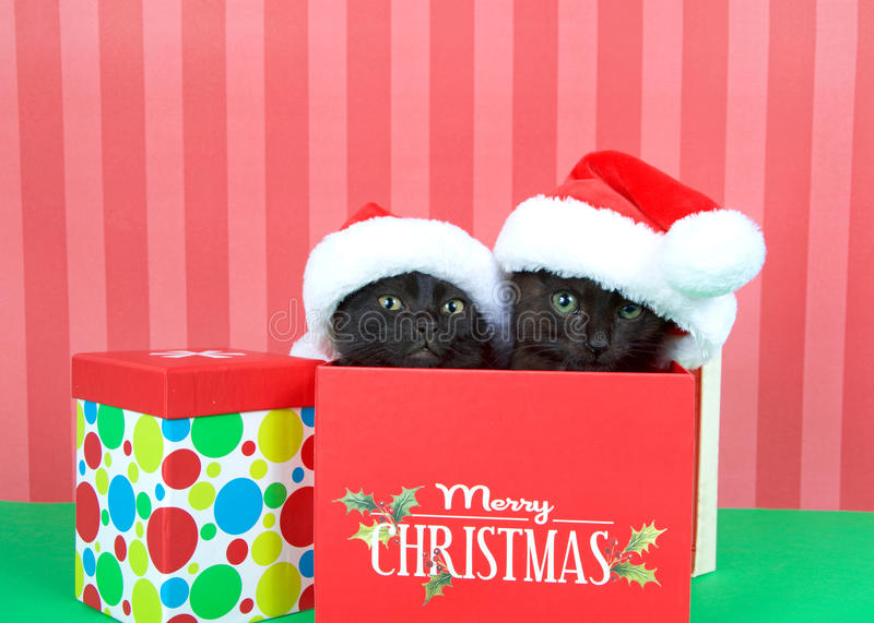 Black kittens in Christmas present with santa hats. Two black kittens siblings brother sister popping out of a red holiday box wearing miniature santa hats royalty free stock image
