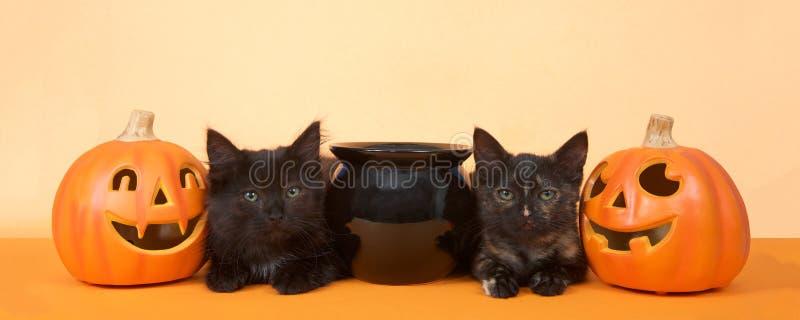 Black kittens happy halloween banner format stock images