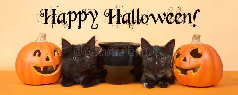Black kittens happy halloween banner format. Two black kittens sitting next to a black cauldron with pumpkin jack o lanterns on each side, orange background royalty free stock photo