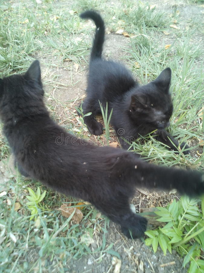 2 black kittens royalty free stock photos