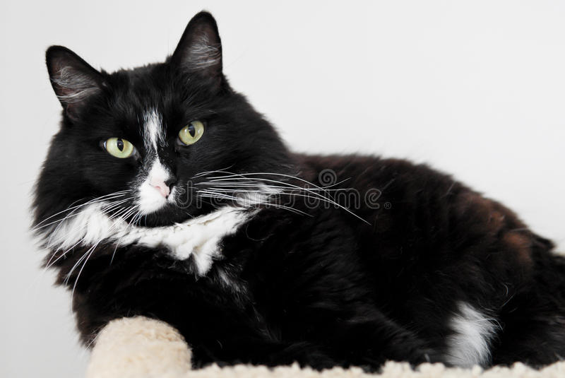 Download Black Kitty stock image. Image of ears, house, black - 21539695