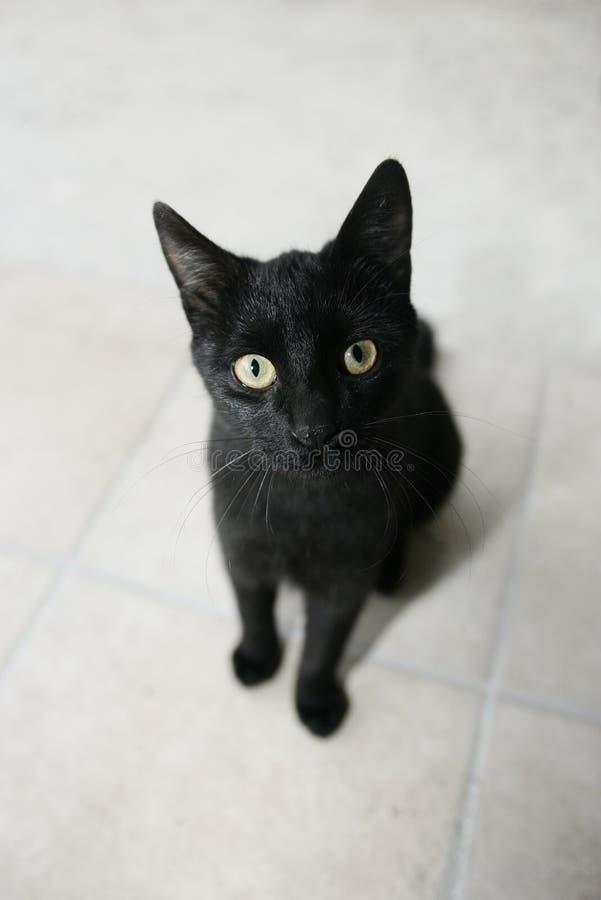 Black kitty royalty free stock photos