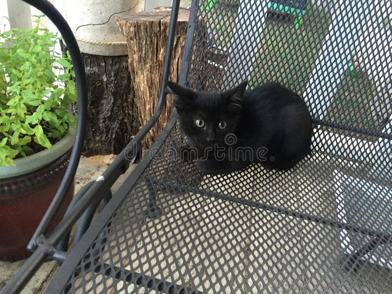Black kitty just waiting for halloween royalty free stock photo