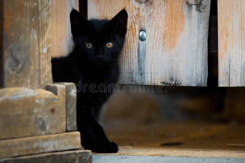 Black Kitty van het hek stock foto's