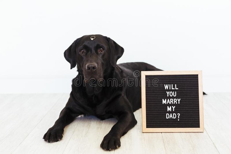 Black labrador dog lying on the floor with a weeding ring on his nose and vintage letter board with message: will you marry my dad. ? Wedding concept.Pets stock photo