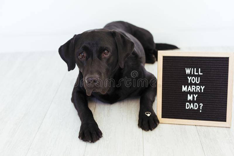 Black labrador dog lying on the floor with a weeding ring on his nose and vintage letter board with message: will you marry my dad. ? Wedding concept.Pets stock photography
