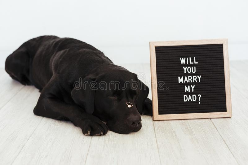 Black labrador dog lying on the floor with a weeding ring on his nose and vintage letter board with message: will you marry my dad. ? Wedding concept.Pets stock images