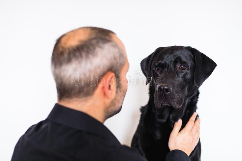 black labrador and his owner at home. friendship concept. Man caressing his dog royalty free stock photo