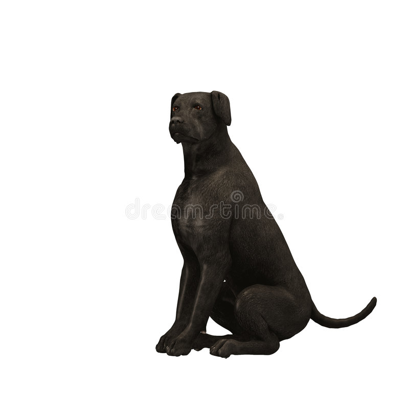 Black Labrador Retriever - 02 royalty free illustration