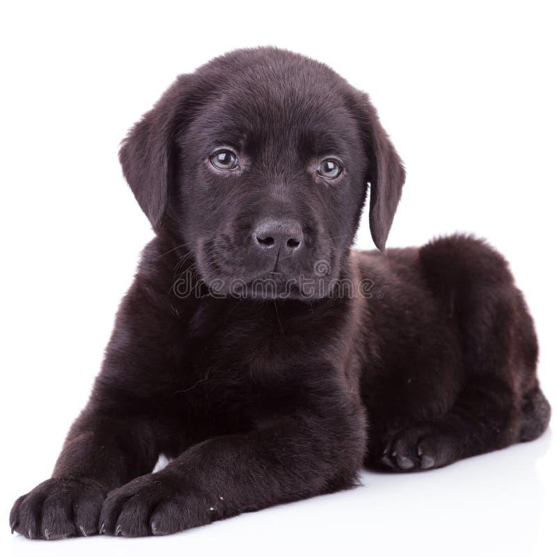 Black dog lying on back - photo#31