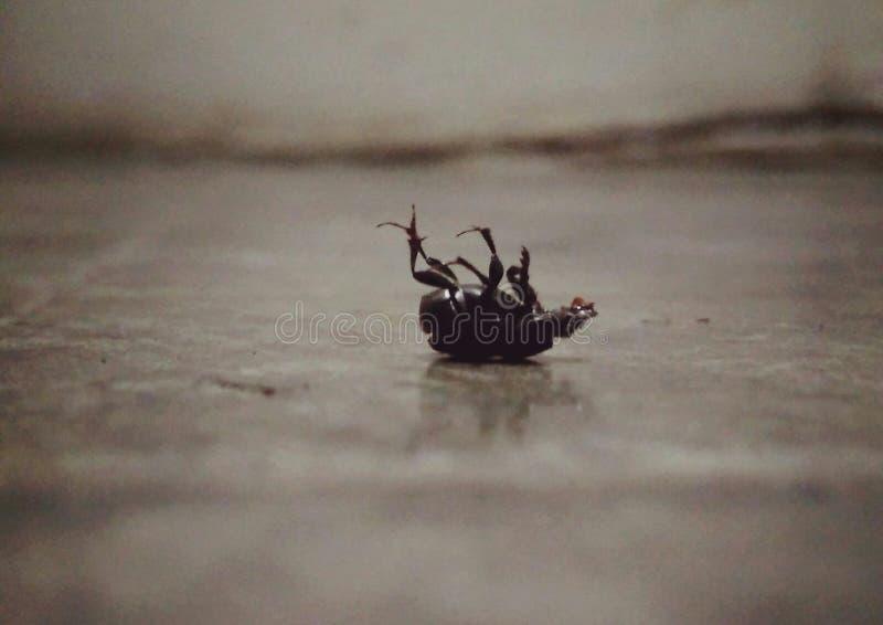 Black Lady Bird royalty free stock photo
