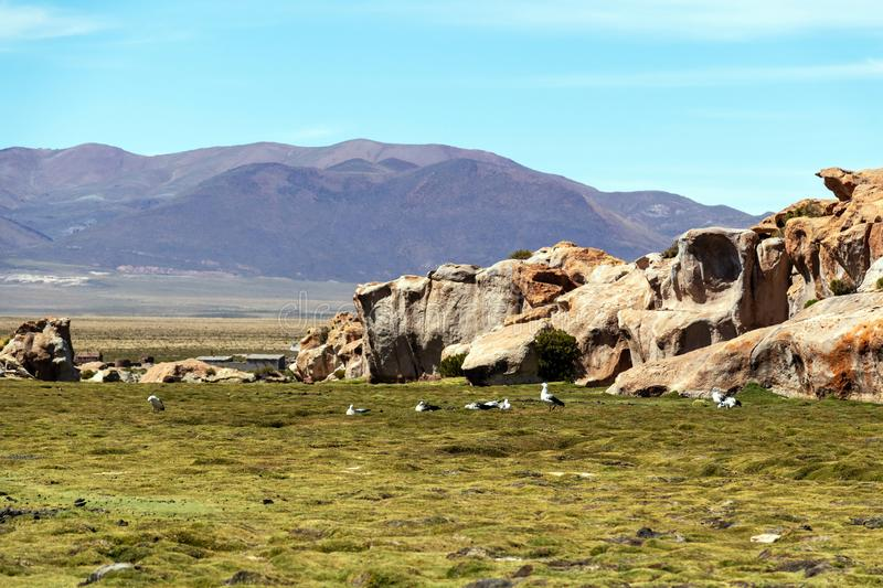 View of the Canyon of Laguna Negra and rocky landscape of the Bolivian plateau, Bolivia, South America. Black lagoon Laguna Negra, Bolivia : Colourful and royalty free stock photos