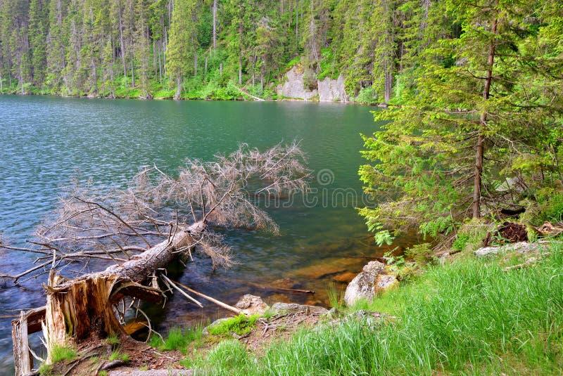 Black lake in the National park Sumava, Czech Republic. Black lake is the largest lake in the National park Sumava, Czech Republic stock photo