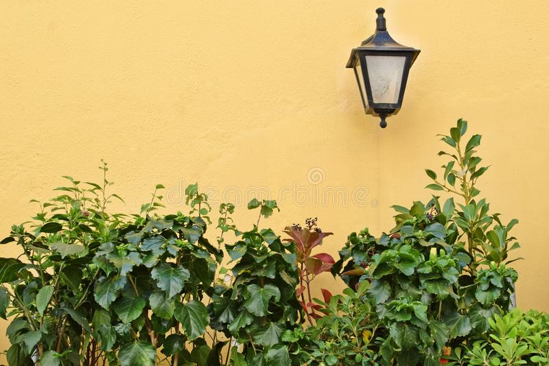 Black lantern on the yellow wall and houseplants. Gardening concept stock photos
