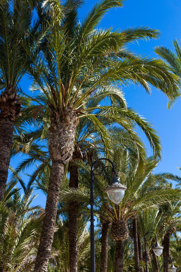 Black lanterns, palm trees on the background of blue sky.  stock image
