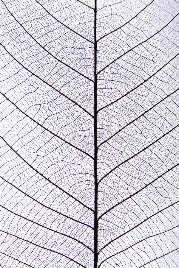Free Black Leaf Vein Pattern Stock Image - 4714521