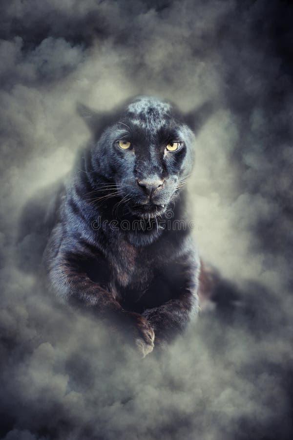 Black leopard in smoke royalty free stock image