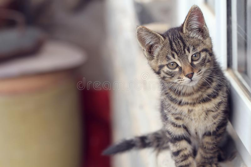 Black little cat. On windowsill in sunny day with bright eyes stock image