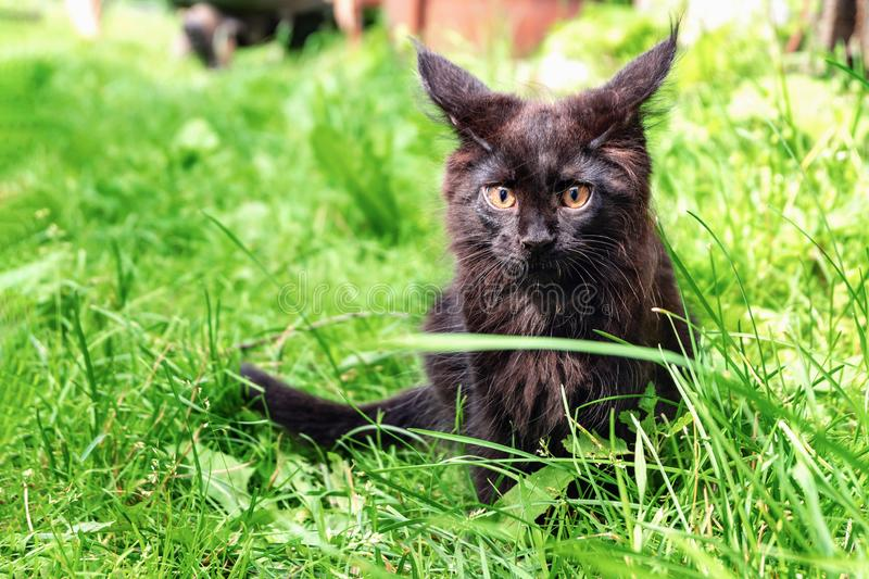 Black little cat sitting on the green grass.  stock photography