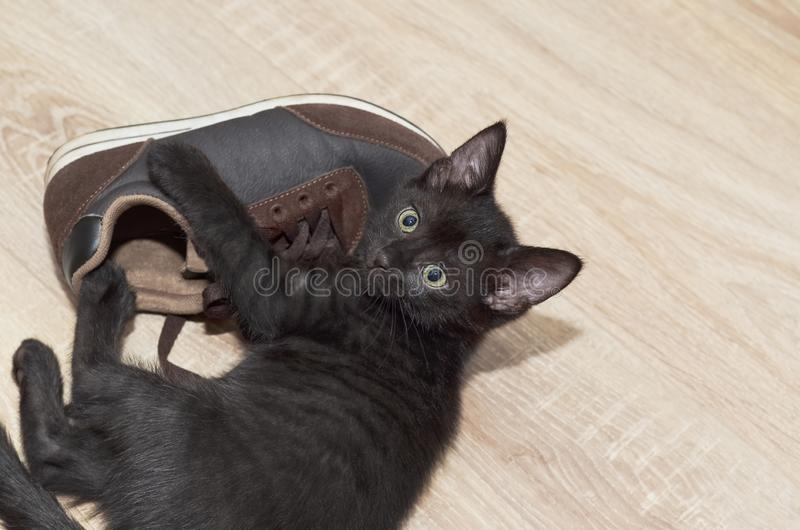 Black little kitten playing with Shoe. Selective focus. Plenty of room for text stock photo