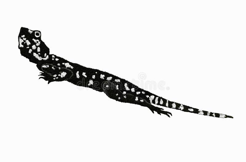 Black lizard stock photography