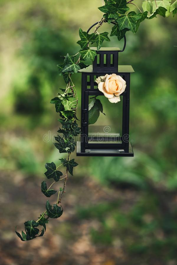 A black metal lantern. Decorated with a twig of ivy and a rose flower stock images