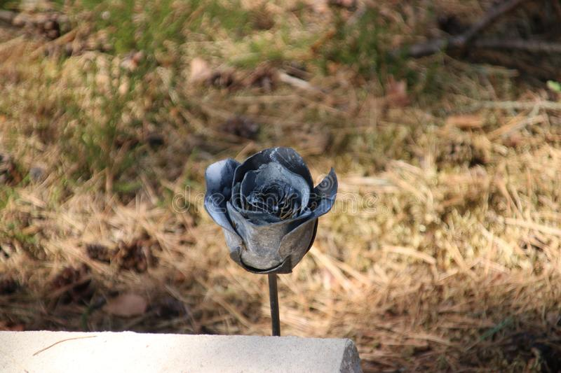 Black metal rose on gravestone on field of honour in Loenen, where soldiers, resistance members, political prisoners or civilians. Are buried after world war 2 royalty free stock photos
