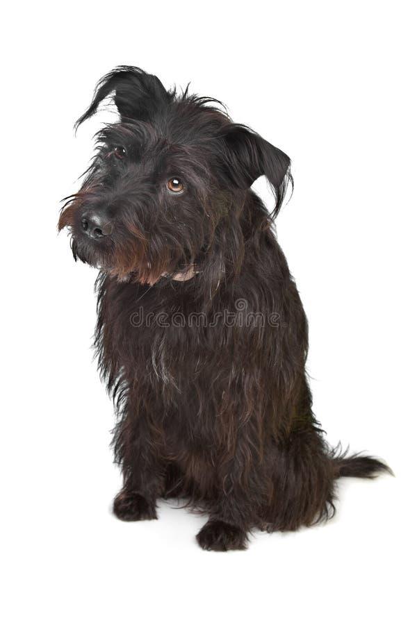 Download Black mixed breed dog stock image. Image of pedigree - 22881037