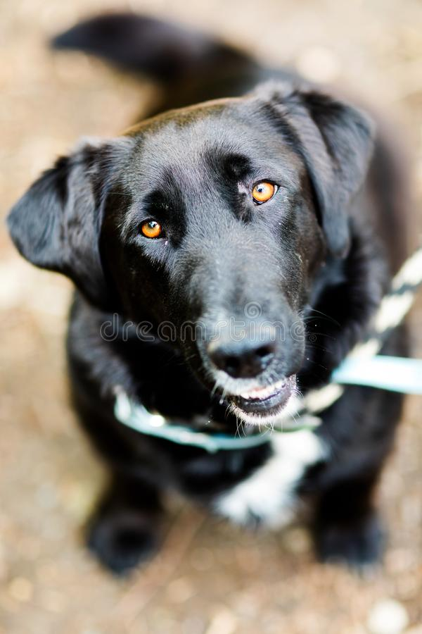 Black mixed dog - caress to adopted pet. Best friend royalty free stock photography